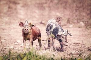 Gluecksschweine_klein