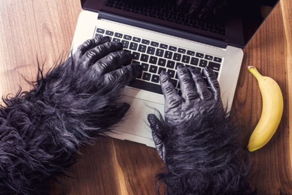 gorilla_laptop